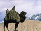 Tadjik Camel Driver on the Silk Road, China Photographic Print by Keren Su