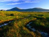Peat Bogs, Rannoch Moor, Scotland Photographic Print by Grant Dixon