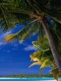 Coconut Palms on Tapuaetai Motu (One-Foot Island), Aitutaki, Cook Islands Photographic Print by Grant Dixon