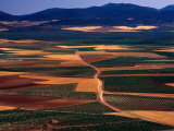 Plains of La Mancha, Spain Photographic Print by Nicholas Pavloff