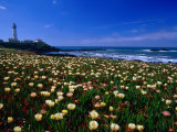 Pigeon Point Lighthouse of San Mateo County, with Wildflowers in Foreground, Sacramento, USA Lámina fotográfica por Brent Winebrenner