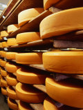 Cheese at Heidi Farm,Tasmania, Australia Photographic Print by John Hay