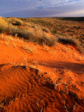 Spinifex and Saltbush Across the Dry Simpson Desert Sand Dunes, Simpson Desert, Australia Photographic Print by John Hay