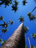 Kapuaiwa Coconut Grove, Kaunakakai, Molokai, Hawaii, USA Photographic Print by Karl Lehmann