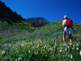 Hiking Mt. Timpanogos in the Wasatch National Forest, Utah, USA Photographic Print by Cheyenne Rouse