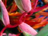 Exotic Flowers for Sale at Parap Outdoor Market, Darwin, Australia Photographic Print by Will Salter