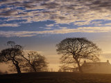 Trees and House Silhouetted in Winter Morning Light, Tyrone, Northern Ireland Photographic Print by Gareth McCormack