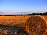 Rolls of Straw in Fields along Highway 26, Georgia, USA Photographic Print by Oliver Strewe