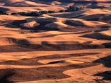 Aerial View of Wheat Field in Palouse Region, Palouse, USA Photographic Print by Nicholas Pavloff