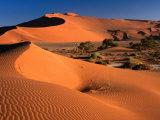 Namib Sand Dunes, Nambia Desert Park, Namib Desert Park, Erongo, Namibia Fotoprint van Carol Polich