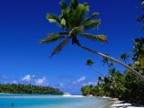 Palm Trees on Beach, Cook Islands Photographic Print by Jean-Bernard Carillet