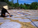 Patrick Syder - Drying Rice Paper Before Cutting into Noodles, Vietnam - Fotografik Baskı