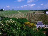 Vineyards and Farmhouses, Chinon, France Photographic Print by Diana Mayfield