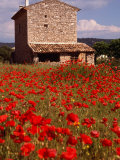 Stone Farmhouse in Field of Poppies, Provence-Alpes-Cote d'Azur, France Photographic Print by Diana Mayfield