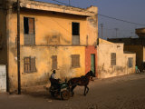 Horse and Cart Passing House, St. Louis, Senegal Fotografie-Druck von Ariadne Van Zandbergen