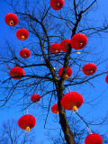 Chinese Lanterns Hanging from Trees in Tivoli Gardens, Copenhagen, Denmark Photographic Print by Izzet Keribar