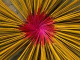 Incense Sticks Laid Out in Pattern to Dry, Mekong Delta, Vietnam Papier Photo par Anders Blomqvist