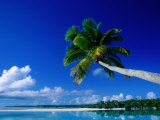 Palm Tree Over Aitutaki Beach and Lagoon, Aitutaki, Southern Group, Cook Islands Photographic Print by John Banagan