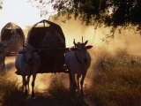 Ox-Carts Stirring Up the Dust at Sunrise, Bagan,Mandalay, Myanmar (Burma) Photographic Print by Anders Blomqvist