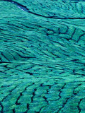 Aerial View of Boh Tea Plantation, Cameron Highlands, Malaysia Photographic Print by Ryan Fox