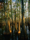Charles Cook - Horseshoe Lake Swamp at Dawn, USA - Fotografik Baskı