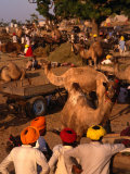 Camel Traders and Camels at Camel Fair, Pushkar, Rajasthan, India Photographic Print by Dallas Stribley