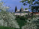 Prague Castle and Cherry Blossoms of Petrin Hill, Prague, Czech Republic Photographie par Richard Nebesky