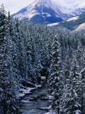 Winter Stream Near Cameron Lake, Waterton Lakes National Park, Alberta, Canada Photographic Print by Lawrence Worcester