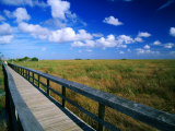 Walkway through River of Grass, Sawgrass Slough, Pa-Hey-Okee Overlook, Everglades NP, U.S.A. Giclee Print