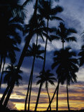 Palm Trees Silhouetted at Sunset, Fiji Photographic Print by Richard I'Anson
