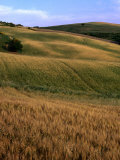 Rolling Hills of Tuscan Countryside, Italy Photographic Print by Bethune Carmichael