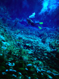 Diver Underwater, Nelson, New Zealand Photographic Print by Jenny & Tony Enderby