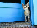 Kitten Standing in Doorway, Apia, Samoa 写真プリント : ウィル ・サルター
