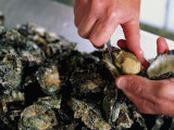Shucking Oysters, Coffin Bay, Australia Photographic Print by John Hay