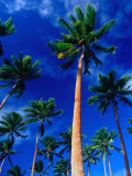 Palm Trees on Yanuca Island on the Coral Coast,Yanuca Island, Fiji Photographic Print by Richard I'Anson