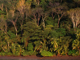 Tropical Rainforest, Corcovado National Park, Puntarenas, Costa Rica Photographic Print by Ralph Lee Hopkins