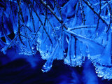 Icicles on Branches, Ireland Photographic Print by Gareth McCormack