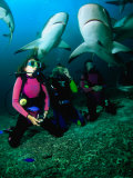 Kneeling in the Coral Rubble as Caribbean Reef Sharks Swim along the Tongue of the Ocean, Bahamas Photographic Print by Michael Lawrence