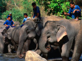 Handlers Sitting on Their Elephants, Chiang Mai, Thailand Photographic Print by John Hay