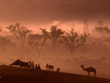 Camel and Camp at Camel Fair, Pushkar, Rajasthan, India Photographic Print by Dallas Stribley