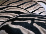 Detail of Burchell's Zebra Stripes, Kruger National Park, Mpumalanga, South Africa Photographic Print by Carol Polich
