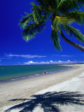 Palm Tree on Beach, Fiji Photographic Print by David Wall