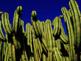 Cactus Againt a Oaxacan Sky in Yagul, Oaxaca, Mexico Photographic Print by Jeffrey Becom