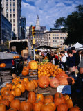 Pumpkins for Sale at Farmers' Market on Union Square, New York City, New York, USA Photographic Print by Angus Oborn