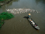 Boatsperson Herding Flock of Ducks Away from Boat on Mekong Delta, Vietnam Photographic Print by Anders Blomqvist