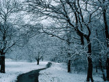 Hampstead Heath in Winter, London, England Photographic Print by Lawrence Worcester