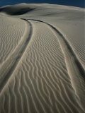 Tyre Tracks Leading into Stockton Sand Dunes, Newcastle, New South Wales, Australia Photographic Print by Dallas Stribley