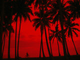Cyclist and Palm Trees Silhouetted Against Red Sky at Sunset in Midigama, Southern, Sri Lanka Fotografiskt tryck av Mark Daffey