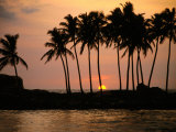 Palm Trees Silhouetted Against Sunset, Hikkaduwa, Southern, Sri Lanka Photographic Print by Mark Daffey
