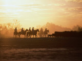 Silhouette of Stockman and Cattle,South Australia, Australia Reproduction photographique par John Hay
